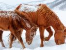 Ворованные лошади