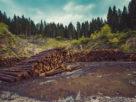 онф лесозаготовка